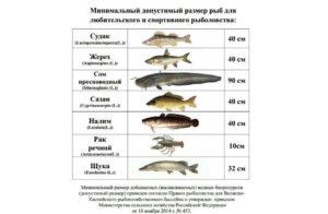 Какую рыбу можно ловить без ограничений в ростовской области