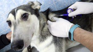 Закон о чипировании животных в россии 2020 текст