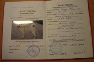 Как сделать документы на собаку с родословной