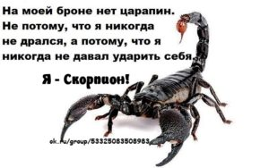 Как скорпионы проявляют симпатию